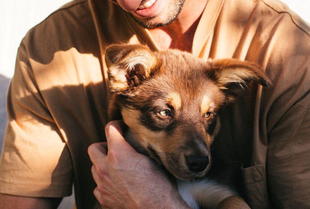 pet guardianship love care inheritance beneficiary estate planning bequeath